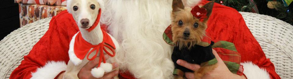 Neuromarketing : y'a quelqu'un qui sait ce que vous voulez pour Noël!