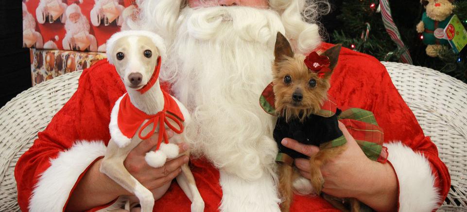 santa-crockpot-dogs
